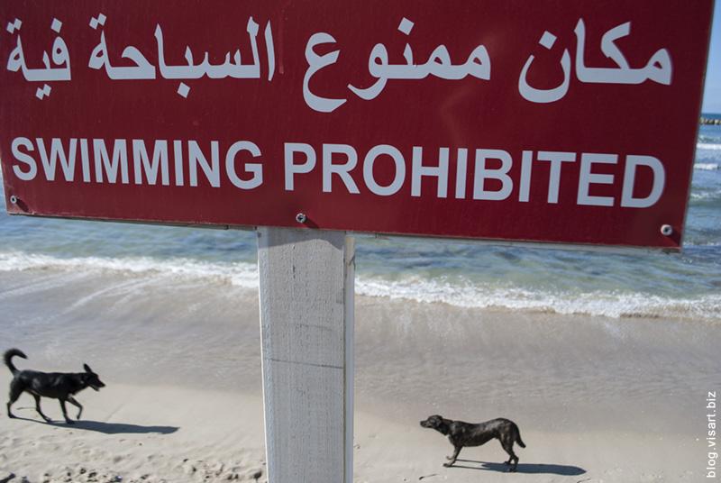 В мире животных Тель Авива